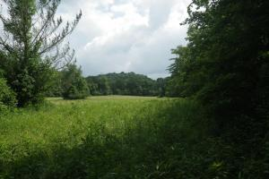 27 Acre Farm with Creek Frontage and Trout Fishing in Hart, KY (30 of 64)