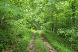 27 Acre Farm with Creek Frontage and Trout Fishing in Hart, KY (20 of 64)