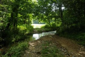 27 Acre Farm with Creek Frontage and Trout Fishing in Hart, KY (23 of 64)