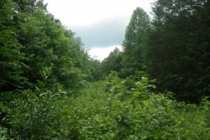 27 Acre Farm with Creek Frontage and Trout Fishing in Hart, KY (45 of 64)