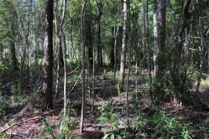 Spotted Fawn Lane Hunting Tract in Pierce, GA (22 of 86)