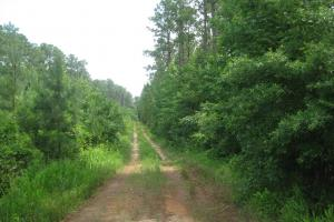 Maybinton Enoree River Timber and Hunting in Newberry, SC (7 of 27)