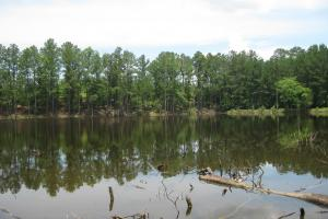 Maybinton Enoree River Timber and Hunting in Newberry, SC (3 of 27)