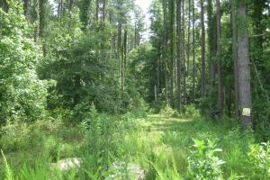 Maybinton Enoree River Timber and Hunting in Newberry, SC (11 of 27)