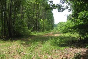 Interior road between 20+ year Loblolly and young trees. (10 of 27)