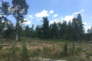 Legion Road Investment Tract in York, SC (17 of 24)