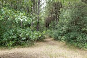14 Acre Homesite bordering National Forest in San Jacinto, TX (16 of 24)