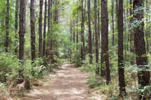 14 Acre Homesite bordering National Forest in San Jacinto, TX (3 of 24)