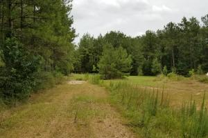 14 Acre Homesite bordering National Forest in San Jacinto, TX (14 of 24)