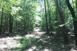 Davis Creek Hunting & Timber Investment in Fayette, AL (13 of 33)