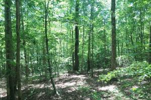 Davis Creek Hunting & Timber Investment in Fayette, AL (26 of 33)