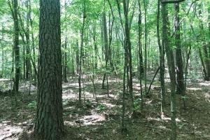 Davis Creek Hunting & Timber Investment in Fayette, AL (16 of 33)
