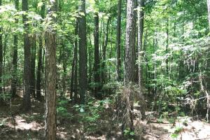 Davis Creek Hunting & Timber Investment in Fayette, AL (11 of 33)