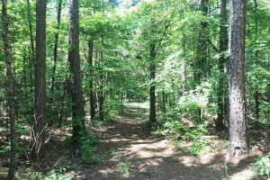 Davis Creek Hunting & Timber Investment in Fayette, AL (8 of 33)