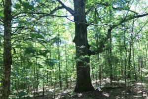 Davis Creek Hunting & Timber Investment in Fayette, AL (6 of 33)