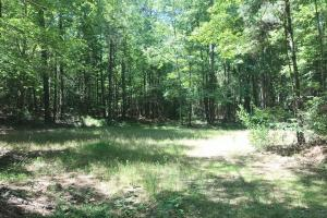 Davis Creek Hunting & Timber Investment in Fayette, AL (29 of 33)