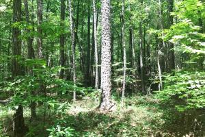 Davis Creek Hunting & Timber Investment in Fayette, AL (27 of 33)