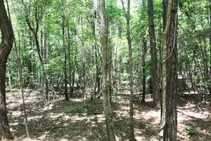 Davis Creek Hunting & Timber Investment in Fayette, AL (25 of 33)