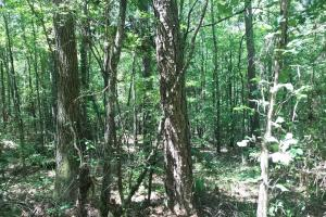 Davis Creek Hunting & Timber Investment in Fayette, AL (12 of 33)