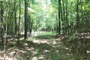 Davis Creek Hunting & Timber Investment in Fayette, AL (20 of 33)