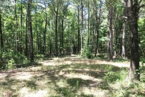 Davis Creek Hunting & Timber Investment in Fayette, AL (30 of 33)