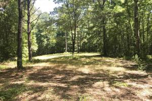 Davis Creek Hunting & Timber Investment in Fayette, AL (18 of 33)