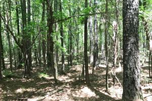 Davis Creek Hunting & Timber Investment in Fayette, AL (19 of 33)
