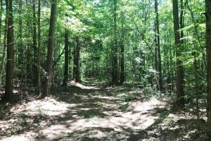 Davis Creek Hunting & Timber Investment in Fayette, AL (32 of 33)