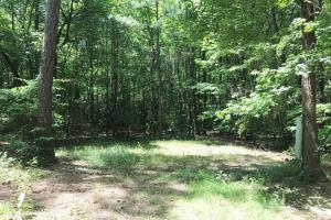 Davis Creek Hunting & Timber Investment in Fayette, AL (31 of 33)