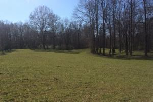 Sipsey Bottom Hunting Tract - Fayette County AL
