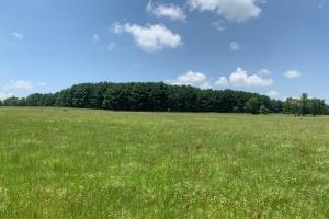 Great mix of timber and grasslands on 110 acres near Canton (6 of 12)