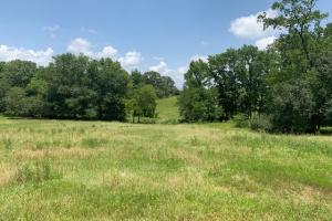 110 Acres 3 ponds, Timber, Great Building Site near Canton  - Van Zandt County TX