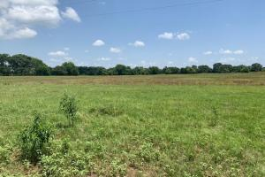 110 acres allows for beautiful, secluded country side views in Grand Saline.  (12 of 12)