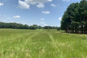 Beautiful lush meadow on 110 acres near Canton (8 of 12)