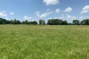 110 acres in Van Zandt County (5 of 12)