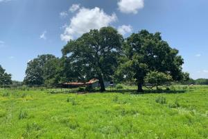 Beautiful large trees surrounding barn on 62 acres in Van Zandt County (7 of 9)