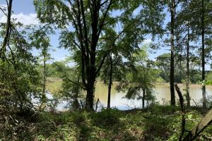 Boeuf River Homesite Potential - Richland Parish LA