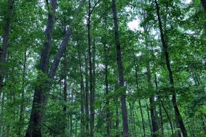 Lexington Timber Investment/Hunting  - Henderson County TN