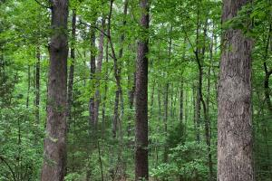 Lexington Timber Investment/Hunting  in Henderson, TN (2 of 4)