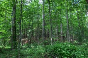 Lexington Timber Investment/Hunting  in Henderson, TN (4 of 4)