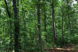 Lexington Timber Investment/Hunting  in Henderson, TN (3 of 4)