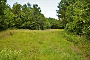 Tannehill Hunting and Homestead Property in Bibb, AL (2 of 18)