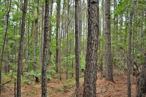 Tannehill Hunting and Homestead Property - Bibb County AL