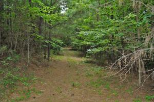 Tannehill Hunting and Homestead Property in Bibb, AL (16 of 18)