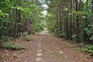 Tannehill Hunting and Homestead Property in Bibb, AL (4 of 18)