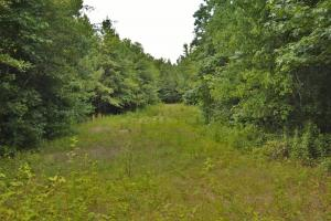 Tannehill Hunting and Homestead Property in Bibb, AL (18 of 18)