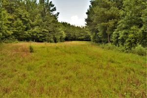 Tannehill Hunting and Homestead Property in Bibb, AL (10 of 18)