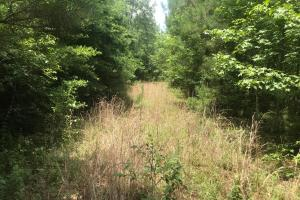 Four acres of pine regeneration are located along the access road which turns South off Gatlin Road on the East side of the tract. (10 of 11)