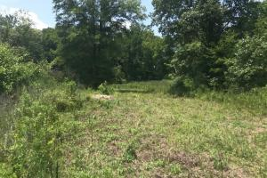 Thickets around the edges of the property provide wildlife cover. (11 of 22)