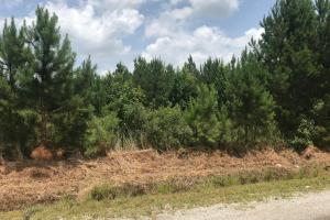 The frontage on County Road 94 has young pine regeneration. (21 of 22)